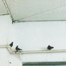 vogelschutznetze-02