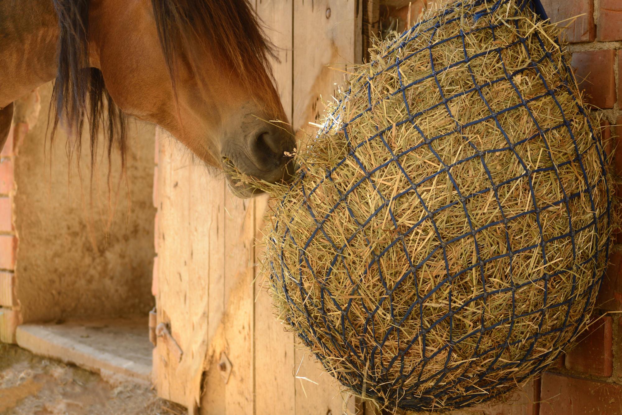 Heunetze-Pferderaufen